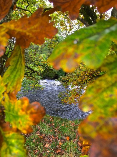 The Wye and Usk valleys will be in their full autumn splendour in the next few weeks