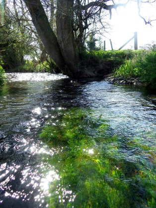 New regulations are very well but will they result in cleaner, healthier Welsh rivers?