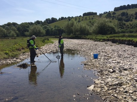 Environment Agency staff carrying out their fish rescue on a drying up River Teme in late May 2020 (photo: Environment Agency)