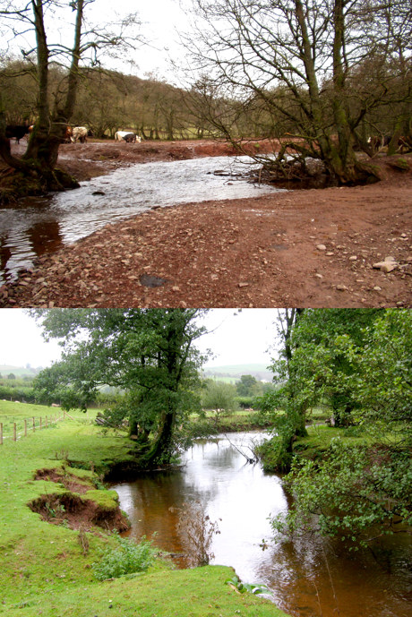 The upper photo is of the Honddu (Usk tribtary) as we found it in 2004. The lower photo shows the recovering stream after habitat work in UP!