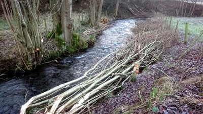 Coppicing and pleaching work on the Edw (upper Wye tributary) completed in December 2018 in the EMFF project