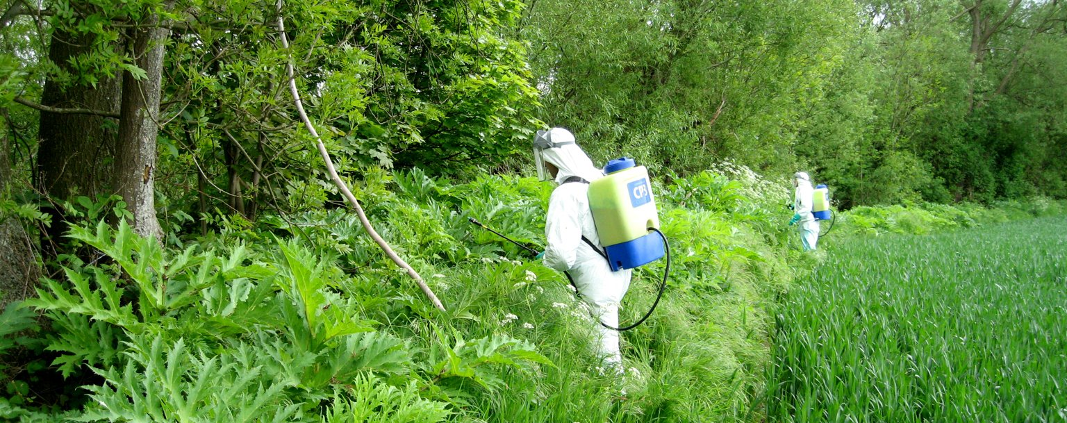 Wye & Usk Foundation staff spraying invasive and noxious Giant hogweed plants