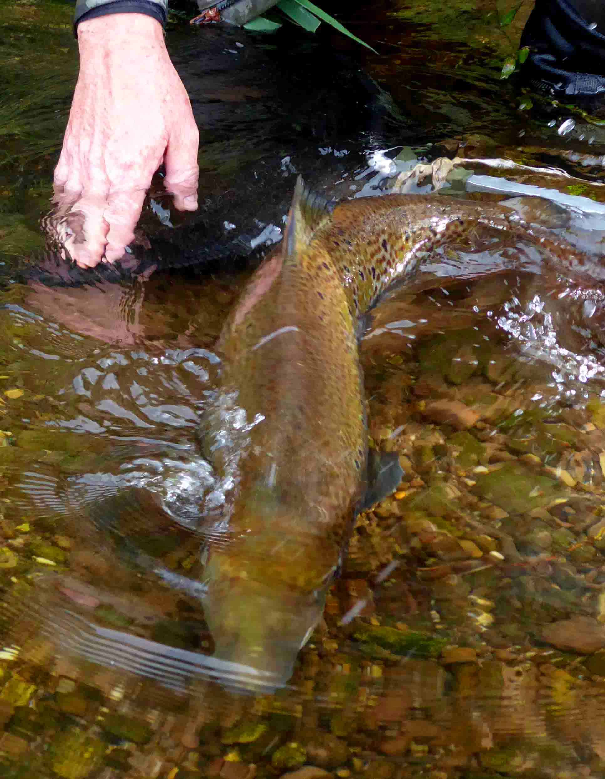 Upper Wye and Usk salmon anglers at least have a chance to end their season their season well! Photo: Guy Mawle