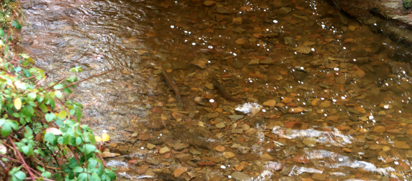 Winter Spawning Starts
